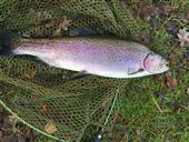 A Beauty 4lb 2oz Rainbow