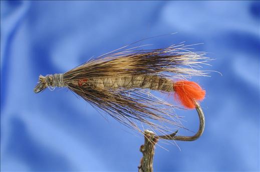 Sackfly