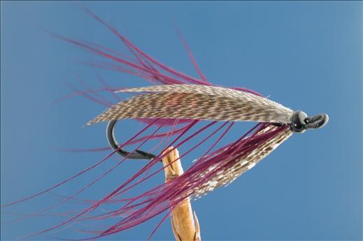 Purple Spey Fly
