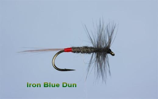 Iron Blue Dun