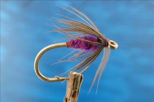Moorhen & Purple Spider