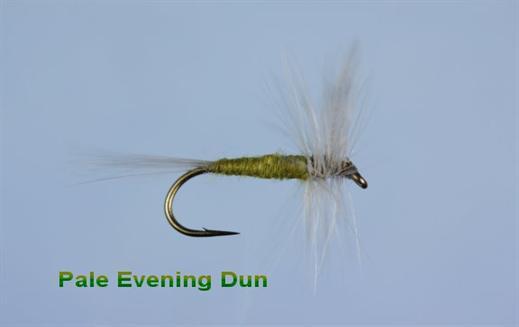 Pale Evening Dun