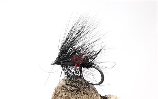 Hairy Bibio