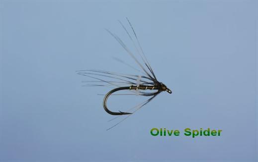 Olive Spider