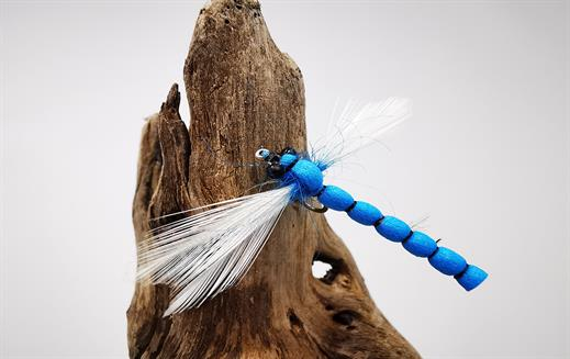 Adult Blue Damsel