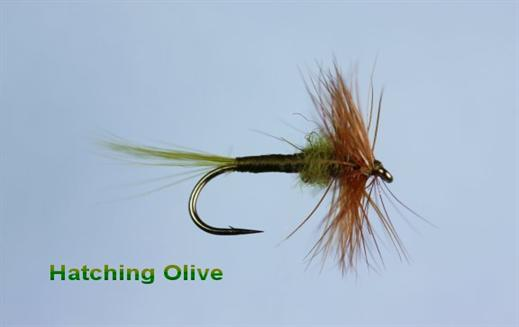 Hatching Olive