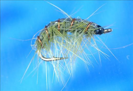 Olive Shrimper