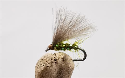 Olive F Wing