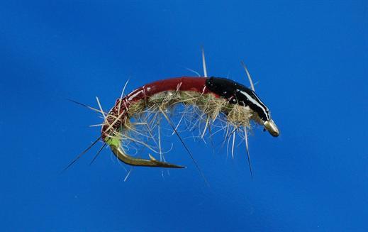 Czech Spot Bug