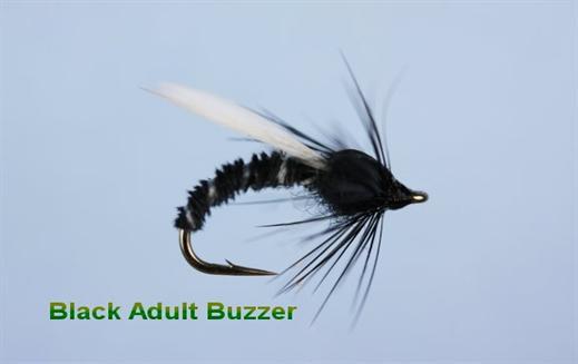 Black Adult Buzzer