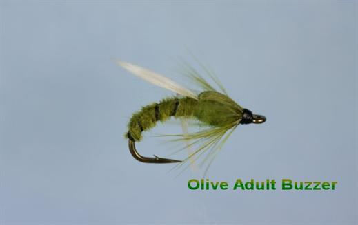 Olive Adult Buzzer