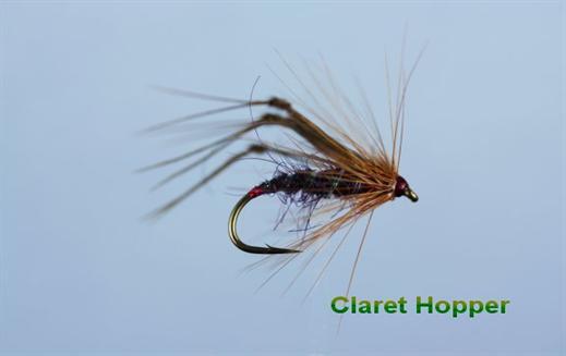 Claret Hackled Hopper