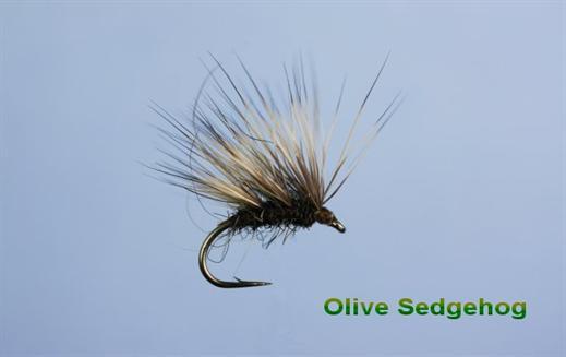 Sedgehog Olive