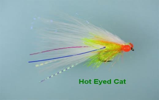 Hot Eyed Cat