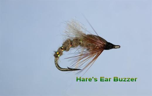 Hares Ear Emerging Buzzer