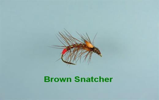 Brown Snatcher JC