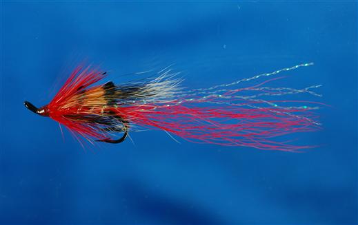 Allys Shrimp Red