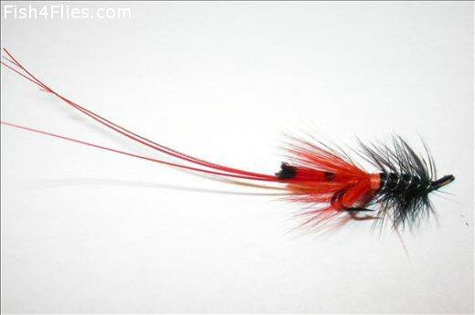 Bobs Black Shrimp