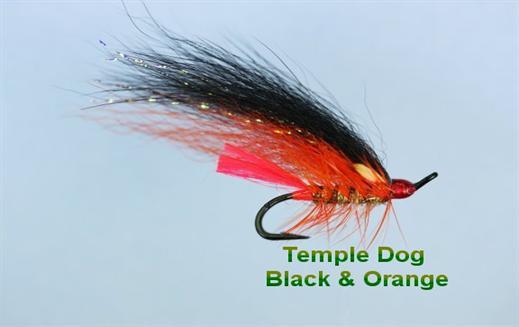 Temple Dog Black and Orange JC