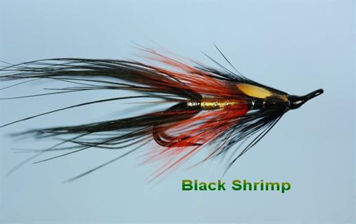 Black Shrimp JC