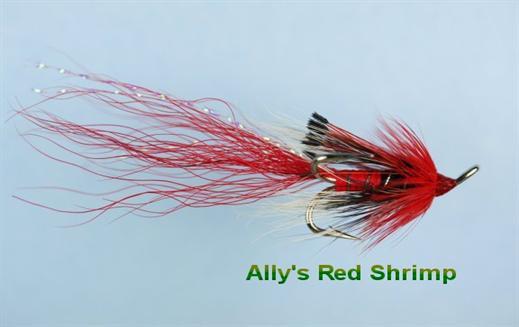 Allys Red Shrimp
