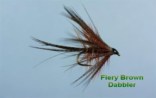 Fiery Brown Dabbler