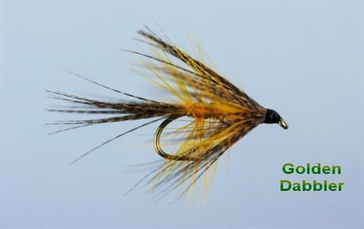 Golden Dabbler