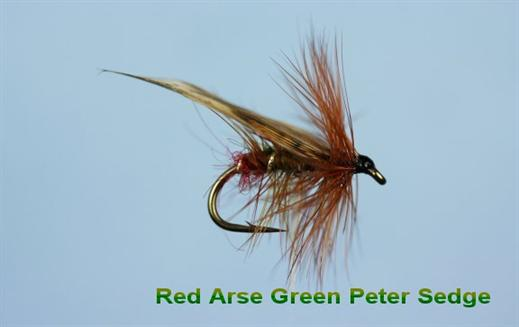 Red Arsed Green Peter Sedge