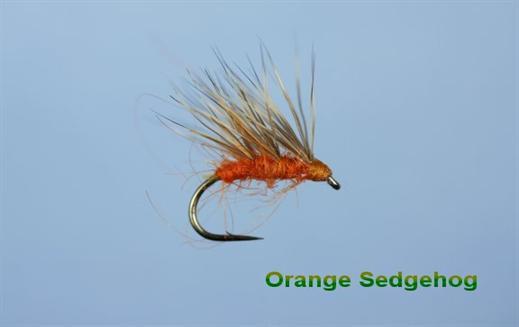 Hot Orange Sedgehog