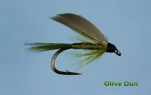 Olive Dun Wet