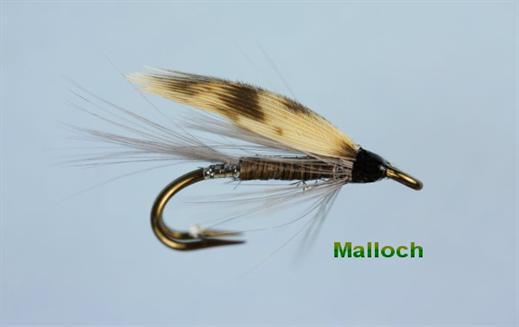 Malloch
