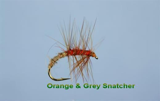 Orange and Grey Snatcher