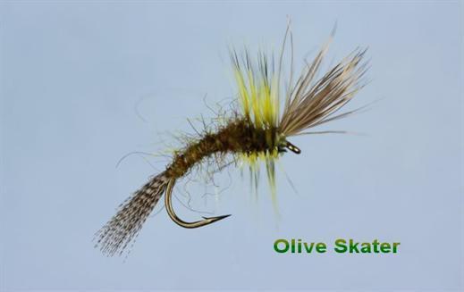 Olive Skater