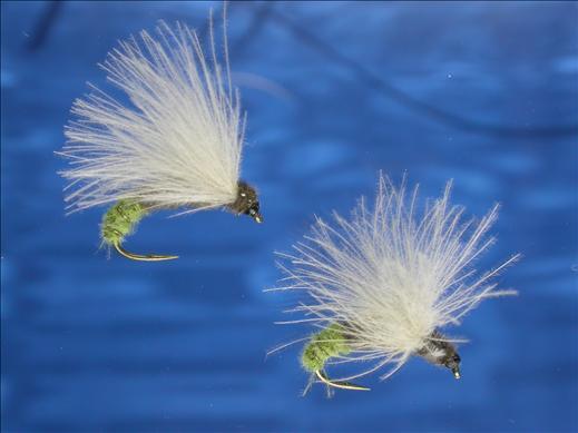 Yellow Butt CDC Caddis Fly