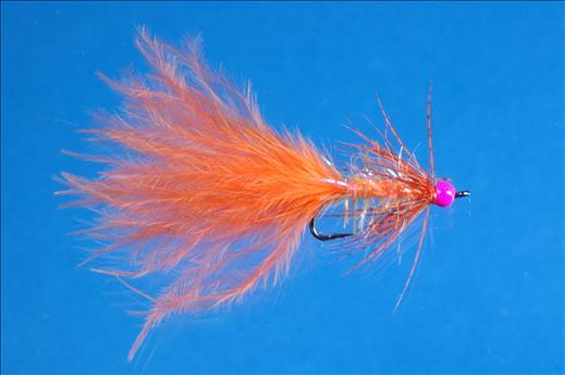 Orange and Pink Darter