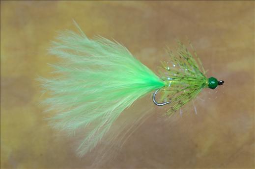 Chartreuse Darter
