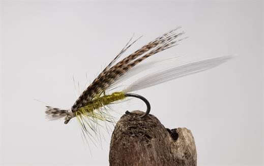 Philip White Active Mayfly
