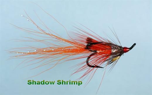 Shadow Shrimp