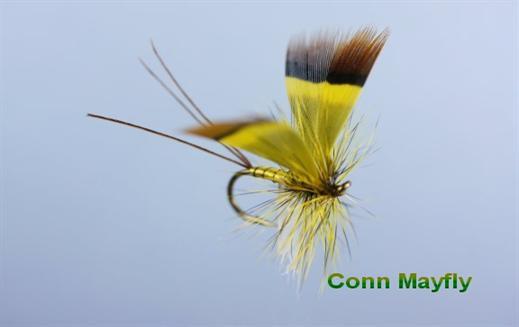 Conn Mayfly