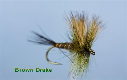 Brown Drake