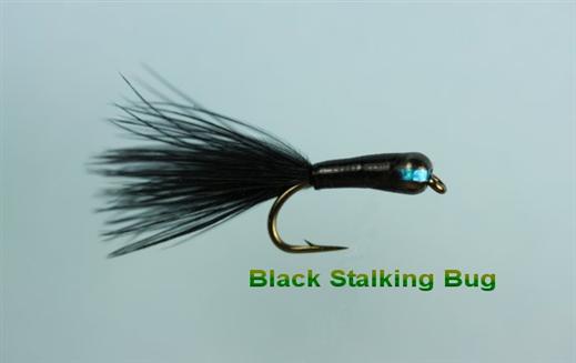 Black Stalker Bug