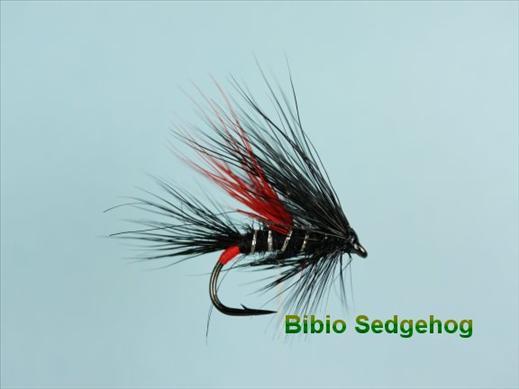 Bibio Sedgehog