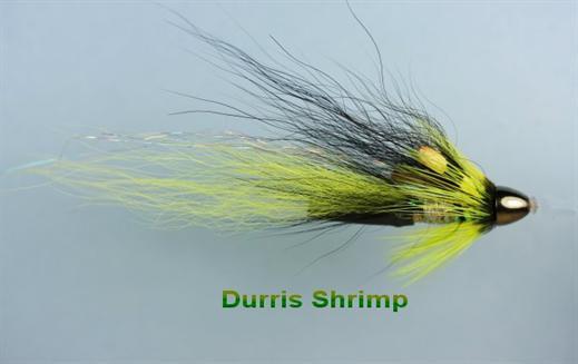 Durris Shrimp