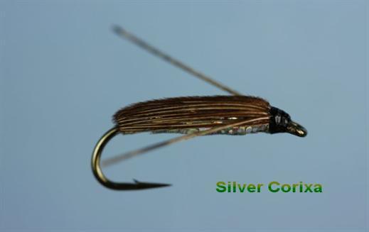 Silver Corixa