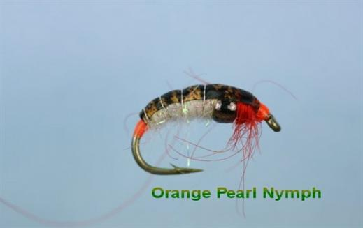 Orange Pearl Bug