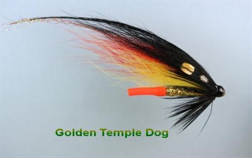 Golden Temple Dog