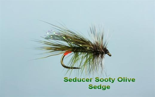 Sooty Olive Seducer Sedge