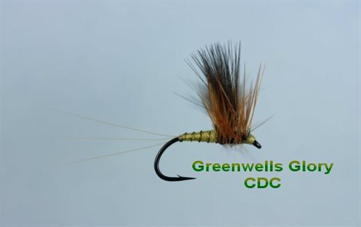 Greenwells Glory CDC