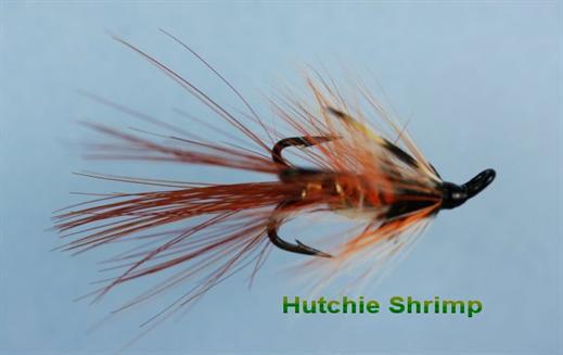 Hutchie Shrimp