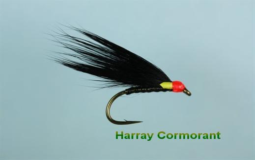 Harray Cormorant